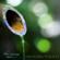 Forest Sounds (Spiritual Healing) - Asian Zen Spa Music Meditation