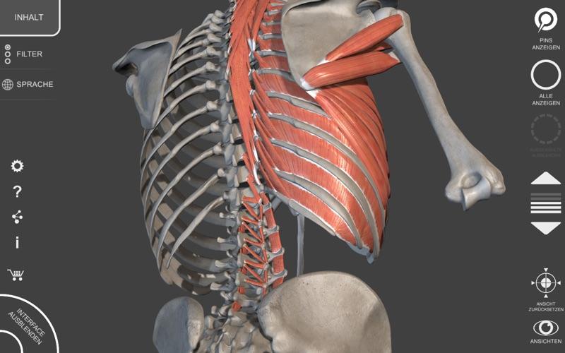 Muskeln | Skelett - 3D Atlas der Anatomie App - Preisentwicklung und ...
