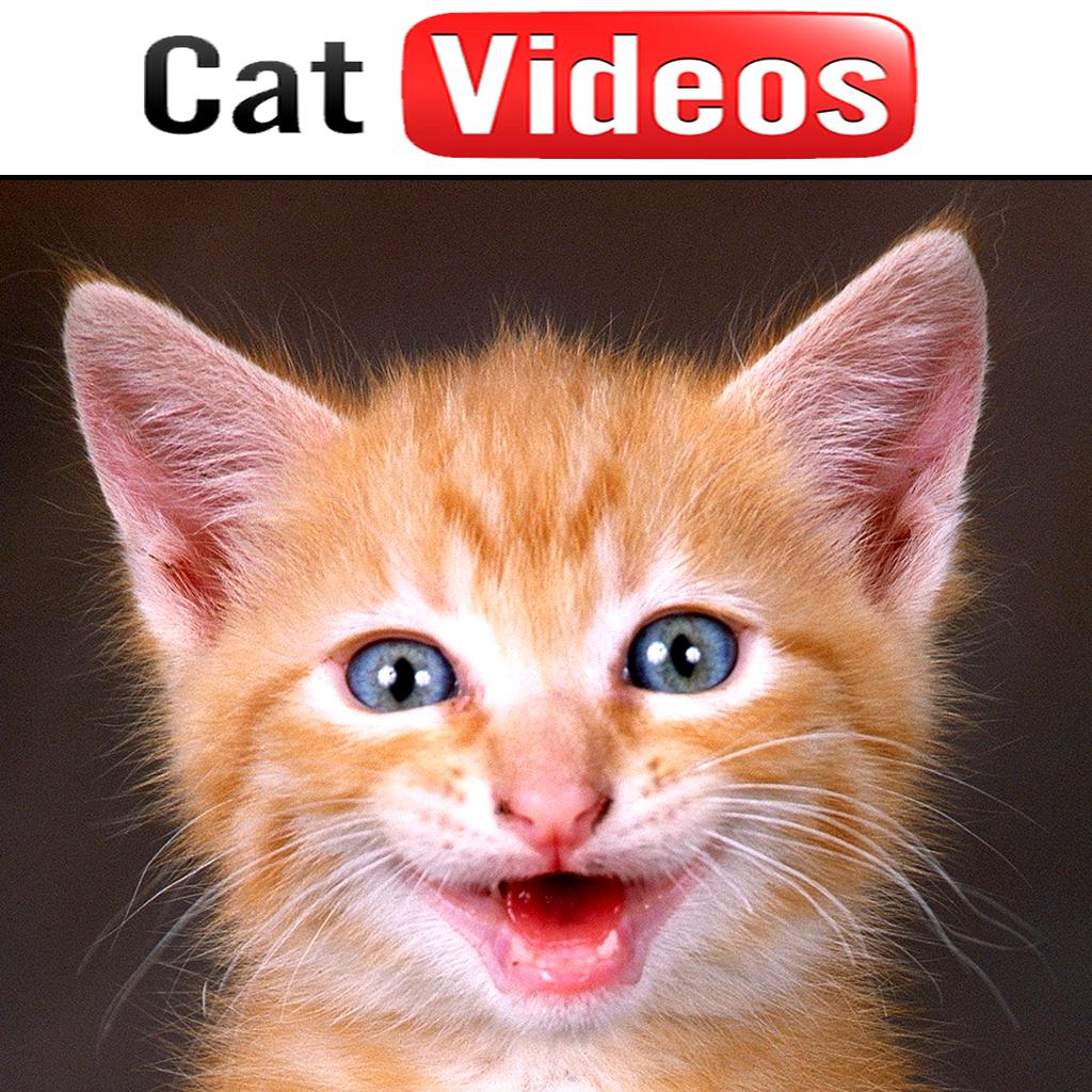 Cat Videos!