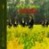 Herb Alpert & The Tijuana Brass This Guy's In Love With You - Herb Alpert & The Tijuana Brass