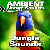 Calm Jungle Background With Gentle Bird Calls - Ambient Nature Sounds