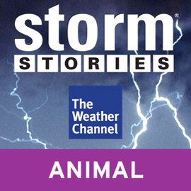 Storm Stories: Weather Dog audiobook