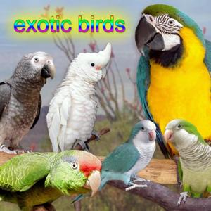Bird Sounds - Territory Calls