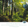 Birds In the Wood & Morning Mood - State R&T Symphony Orchestra Moscow