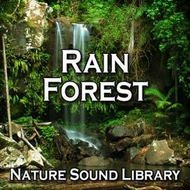 Rain Forest (Nature Sounds for Deep Sleep, Relaxation, Meditation