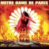 Multi-interprètes - Notre Dame de Paris - Live au Palais des Congrés illustration