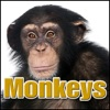 Monkeys Sound Effects