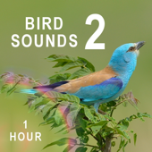 Bird Sounds 2 - Beautiful Forest's Songs for Relaxation, Meditation, Therapy, Sleep (Spa for Body, Mind and Soul)