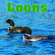 Relaxed Echoing Loons Calls On a Northern Lake - Nature Sounds
