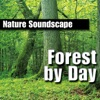 Forest By Day Nature Sounds Only