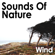 Wind Howls Through the Forest Valley - Pro Sound Effects Library