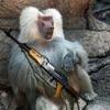 The Armed Ape