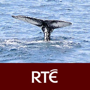 RTÉ - Into the Deep