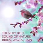 Life Sounds Nature - Beautiful Bird Song For Relaxation, Studying, Massage