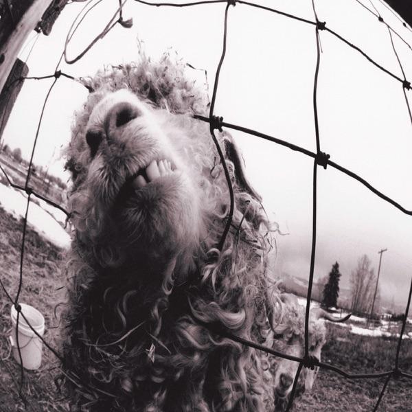 Pearl Jam mit Leash