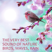 The Very Best Sound of Nature - Birds, Waves, Rain (with Forest, Creek, Wind, Thunder) [Sound for Relaxation, Meditation, Healing, Massage, Deep Sleep, Yoga]
