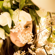 Angelina Jordan What a Difference a Day Makes - Angelina Jordan