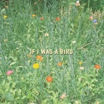 Colie - If I Was a Bird