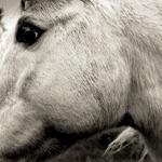 Bonny Light Horseman - Mountain Rain (feat. Eric D. Johnson, Josh Kaufman, & Anais Mitchell)