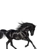 Old Town Road - Lil Nas X Cover Art