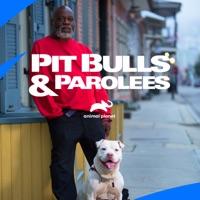 Télécharger Pit Bulls and Parolees, Season 15 Episode 11
