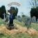 Chris Farlowe - The Last Goodbye