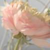 神宿 - Erasor 插圖