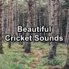 Sleep Crickets, Nature Noise & Cricket Sounds - Beautiful Cricket Sounds  artwork