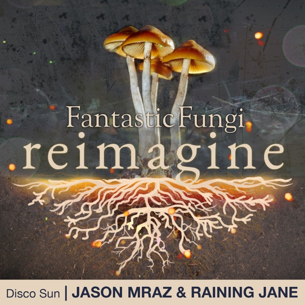 Disco Sun (Fantastic Fungi: Reimagine) - Single