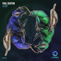 Wasp - PAUL DENTON