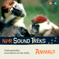 NPR Sound Treks: Animals: Unforgettable Encounters in the Wild