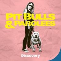 Télécharger Pit Bulls and Parolees, Season 18 Episode 5