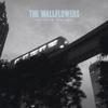 The Wallflowers - One Headlight artwork