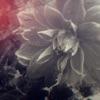 偽りのシンパシー ft.アイナ・ジ・エンド(BiSH) - Single ジャケット画像