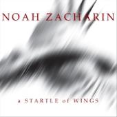 Noah Zacharin - Starlings