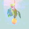 Kenshi Yonezu - Lemon 插圖