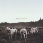 Foxing - Calm Before