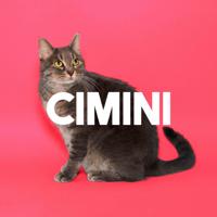 Cimini