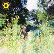 Sunflower - Rex Orange County - Rex Orange County