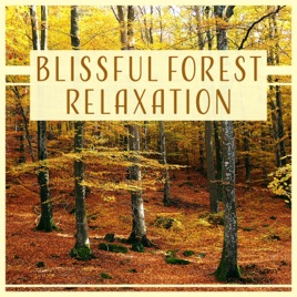 Blissful Forest Relaxation: Woodland Ambient, Soothing Music, Call of  Nature, Sounds for Home Meditation, Better Sleep & Spa Massage by Calm