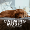 Calming Music for Dog Anxiety - Academy to Relax Pet Songs - Direction Piano & Calming Piano Music