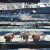 David & Valerie Carpenter - Cold of the Winter  Single Album