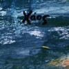 x.a.o.s - Xaos artwork