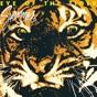 Eye of the Tiger by Survivor