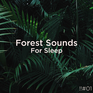 Nature Sounds Nature Music & Nature Sounds - !!#01 Forest Sounds for Sleep