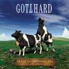 Gotthard - Heaven (Live) Grafik