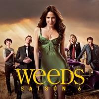 Télécharger Weeds, Saison 6 (VF) Episode 6