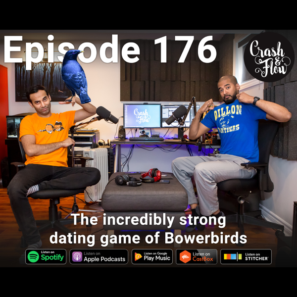 Dating-Trainer Podcast