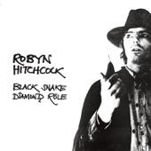 Robyn Hitchcock - I Watch the Cars