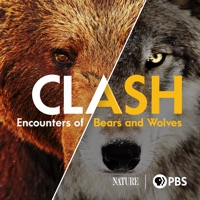 Télécharger Clash: Encounters of Bears and Wolves Episode 1